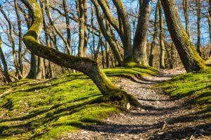 Bergwanderweg mit Kräuterm